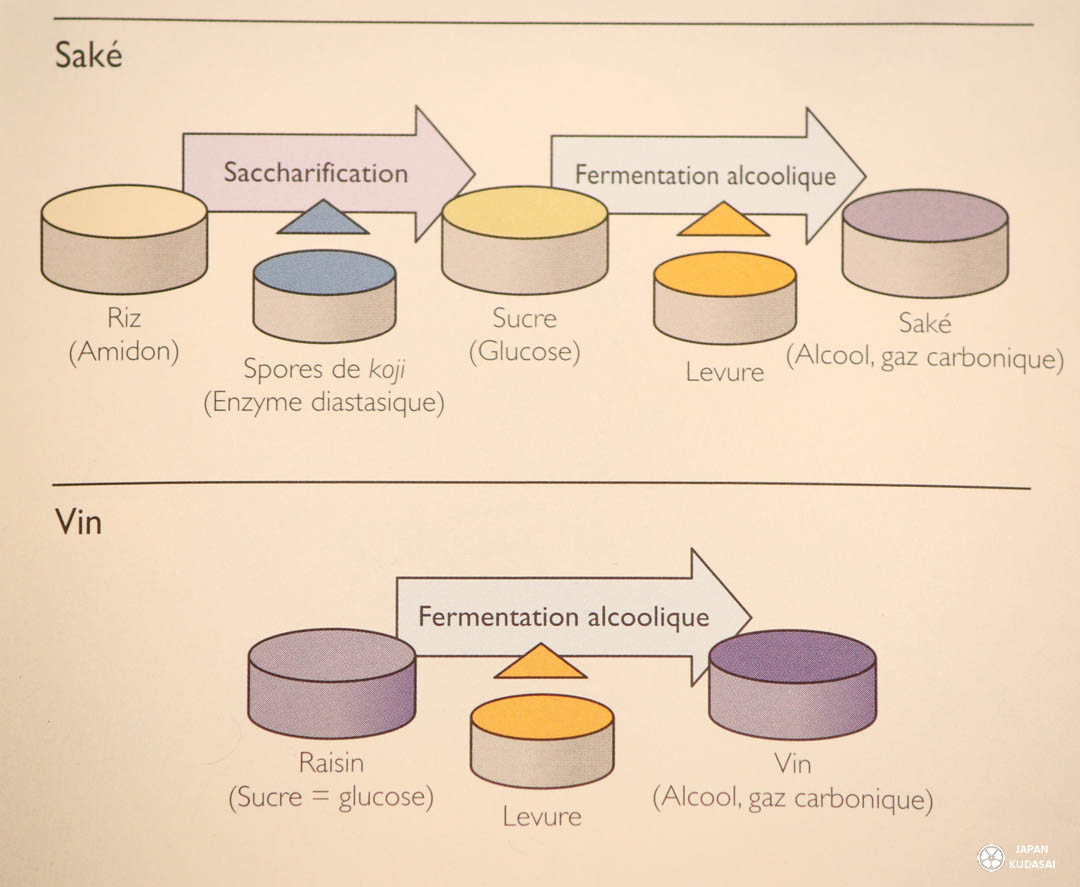 Cycles de production du saké et du vin.