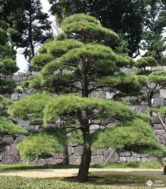 Jardin imperial tokyo 03 japan kudasai for Jardin imperial