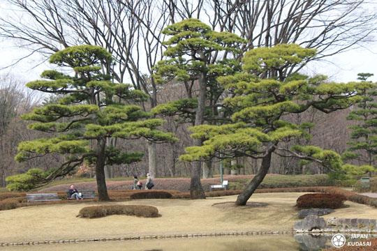 Jardin imperial tokyo 11 japan kudasai for Jardin imperial